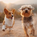 CBD for Autoimmune Diseases in Dogs: Could it Help Manage the Pain?